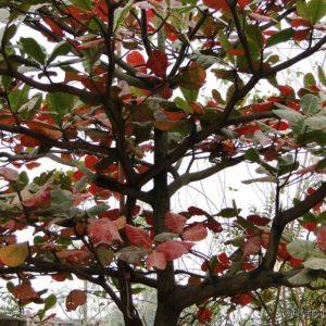Viết về loài cây em yêu quý
