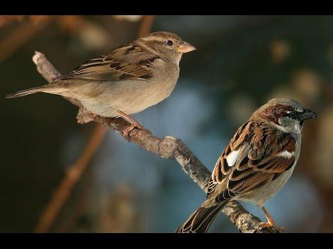 van mau ke ve mot loai chim Kể về một loài chim